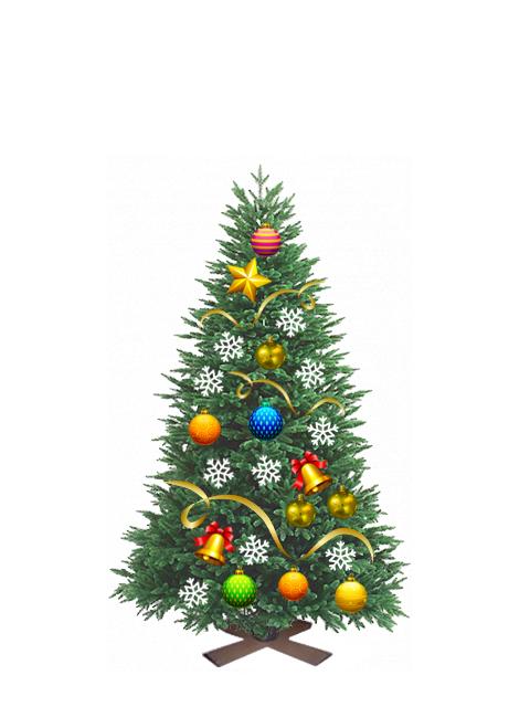 Пихта живая новогодняя от 1,50 до 1,75 метра