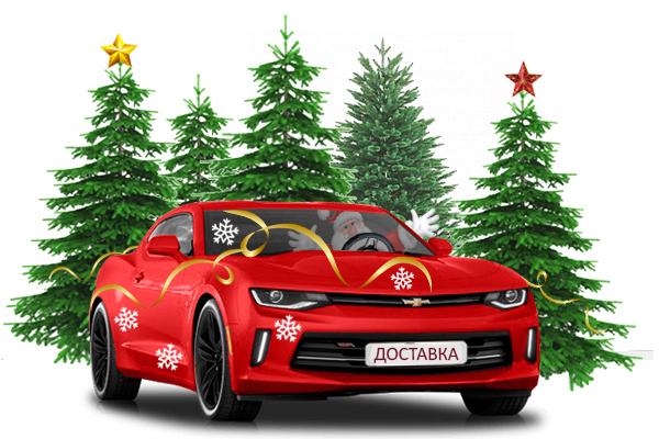 Купить елку живую новогоднюю с доставкой в Екатеринбурге